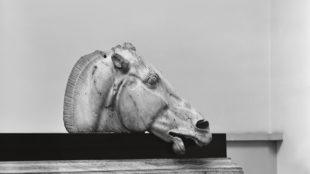 Pferdekopf vom Viergespann der Selene, Ostgiebel des Parthenon, Akropolis, um 437/432 v. Chr., British Museum London, © Hirmer Fotoarchiv
