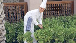 Gabi Kurz in ihrem Kräutergarten des Restaurants Magnolia in Dubai © Gabi Kurz